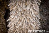 Korntage-2012-0140